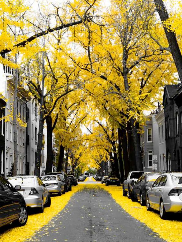 Flowery Streets - Washington DC, USA