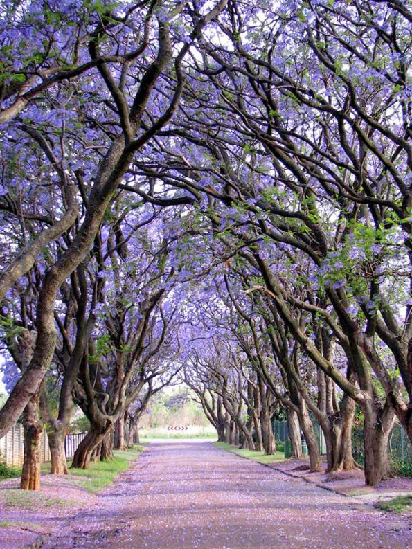 Flowery Streets - Cullinan, South Africa