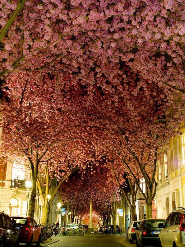 Flowery Streets - Bon, Germany