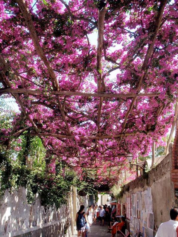 Flowery Streets - Positano, Italy