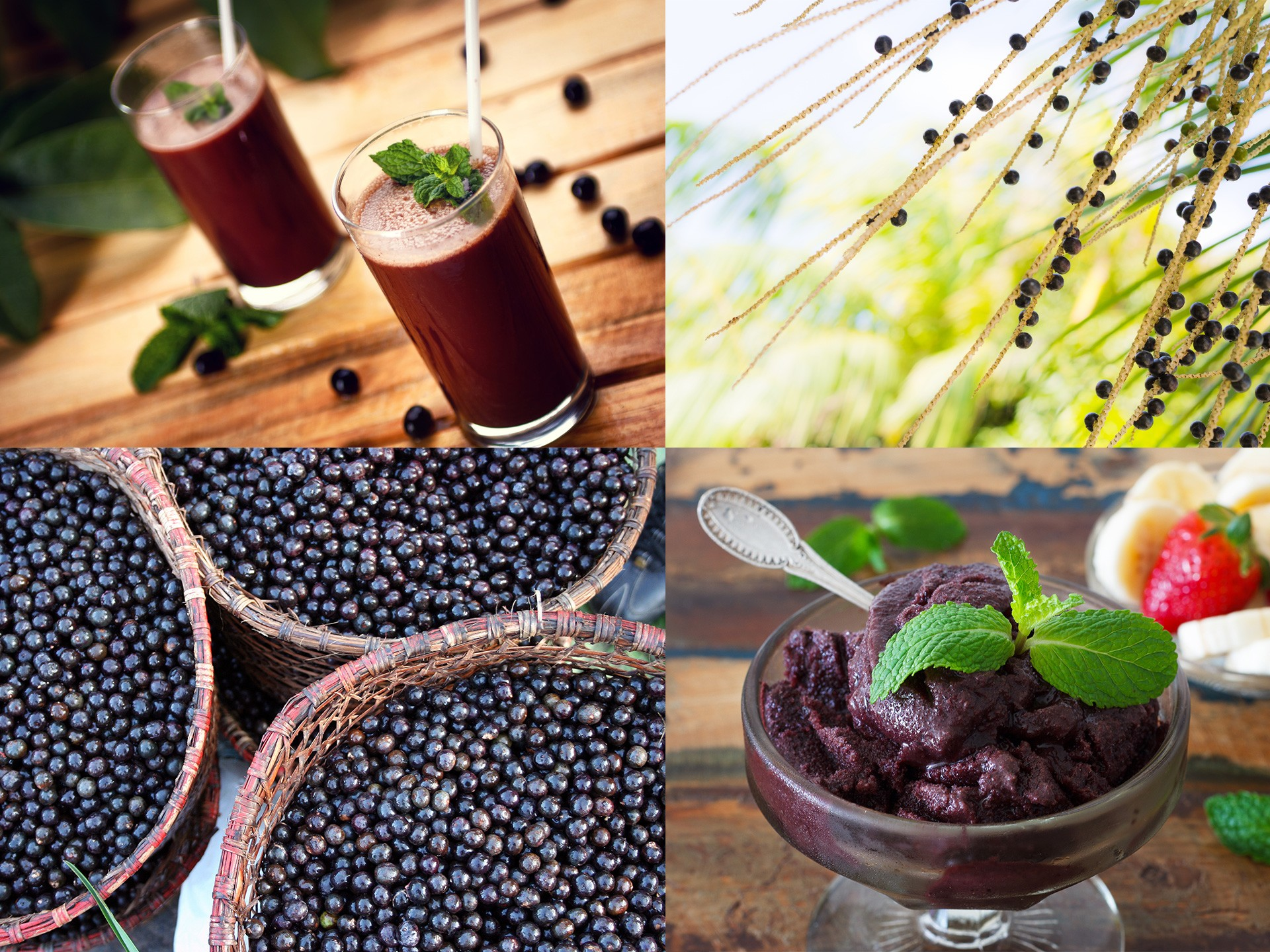 Acai Berry Juice Benefits