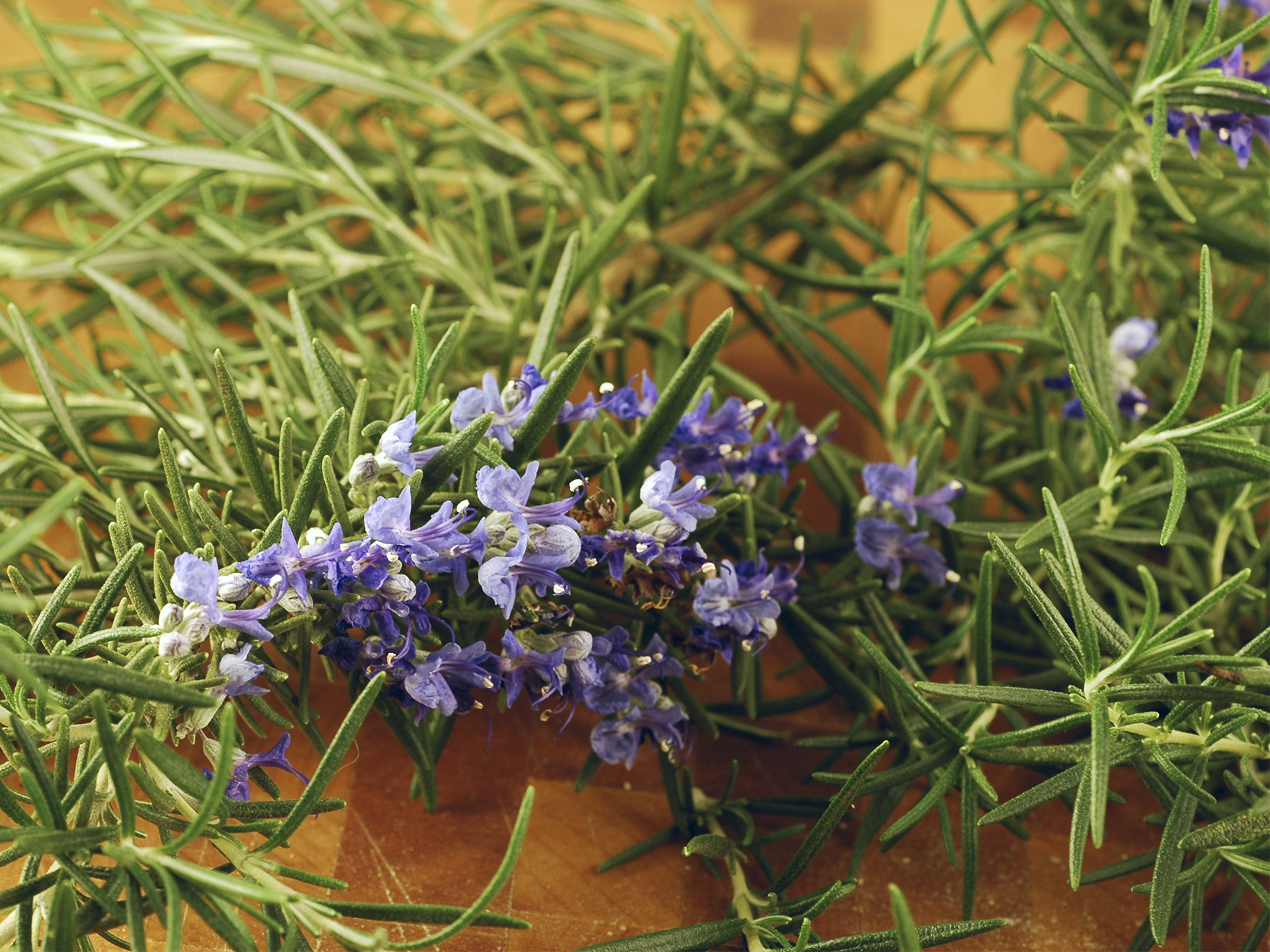 Rosemary Benefits