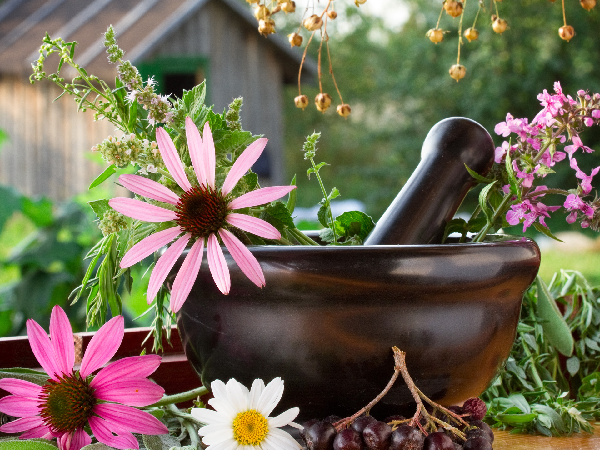 Herbs & Nature Products