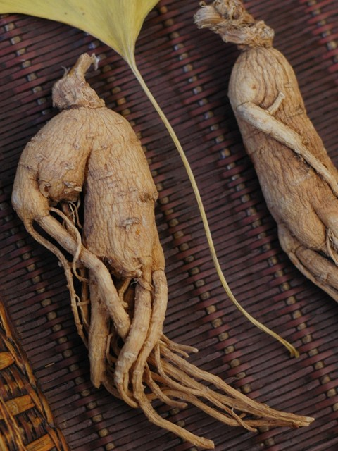 Ginseng Root Benefits by Herbs Natura