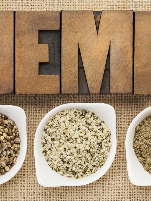 Hemp - Marijuana Cannabis Sativa