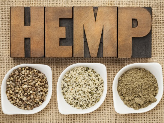 Hemp - Marijuana Cannabis Sativa