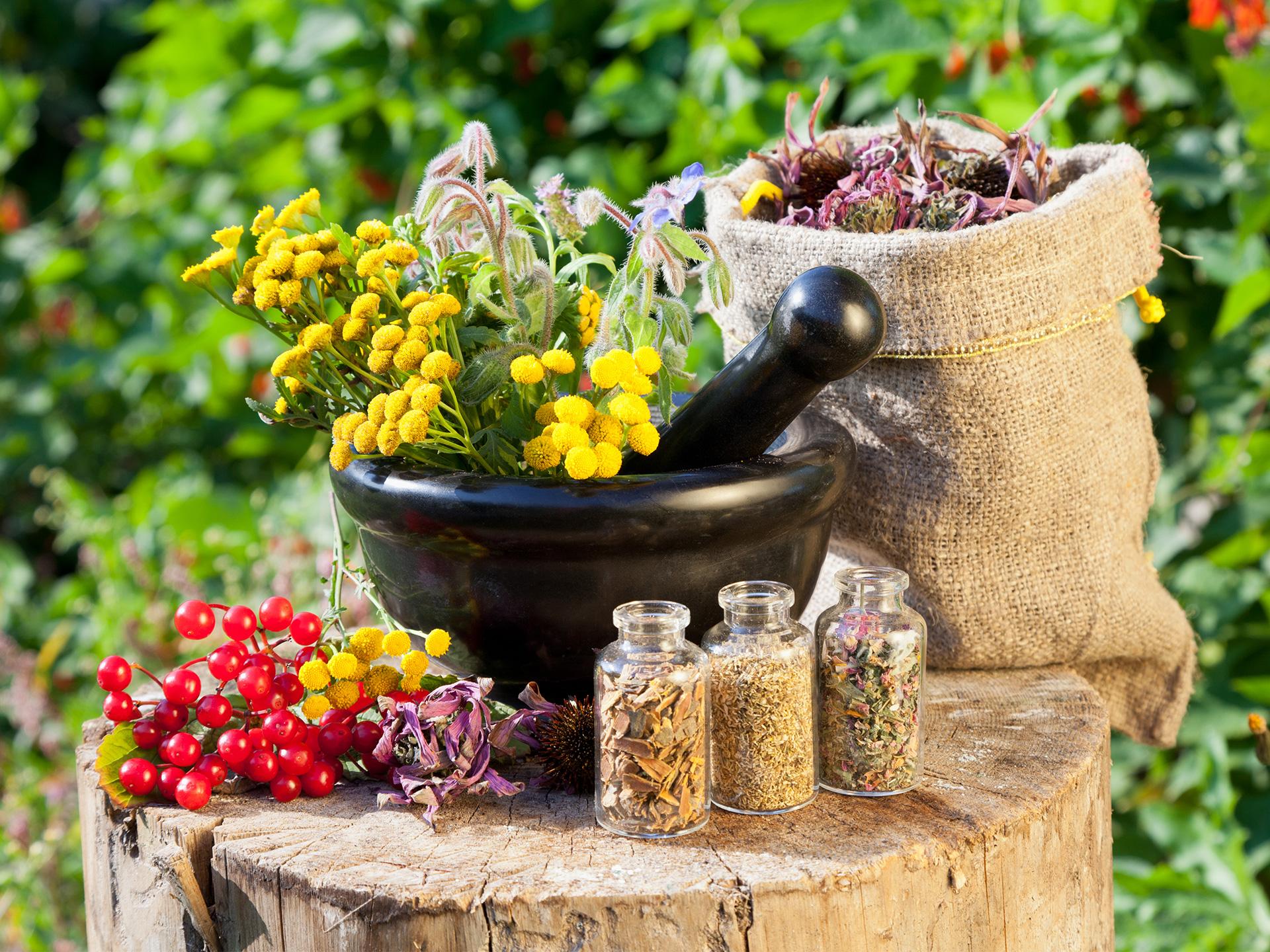 Herbs List & Uses
