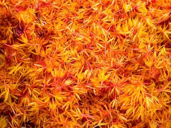 All About Saffron